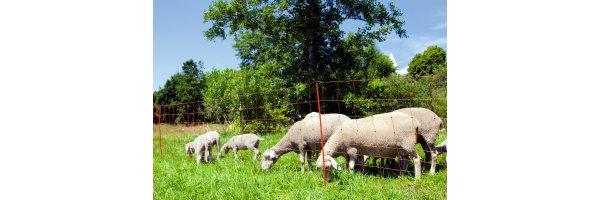 Sheep Fencing