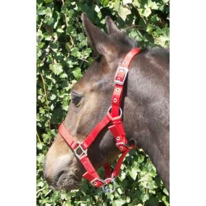 Foal Halter threefold adjustable, blue