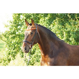 Amber bridle German Riding Duo